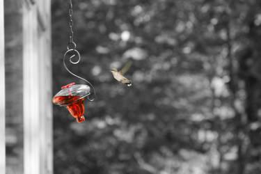 Hummingbird II by Bamzu