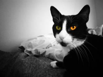 Cat Eyes by Bamzu