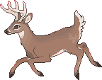 Whitetail by CrookedAntlers
