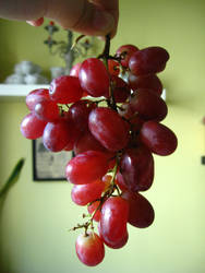Grapes - stock by rarous-stock