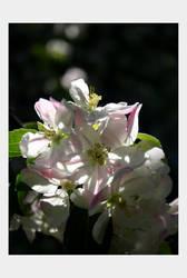 flower waltz by feather-ru