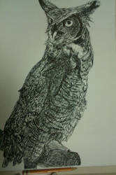 Great Horned Owl In pen by ChaplinSolus