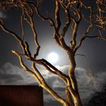 Norfolk Moonlight by Coigach