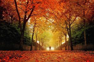 Autumn Park 1 by Coigach