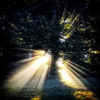 Shine1 by Coigach