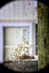 Arachnophilia by Coigach