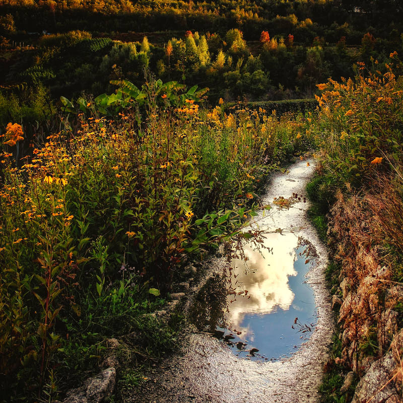 A Path Through Eden by Coigach