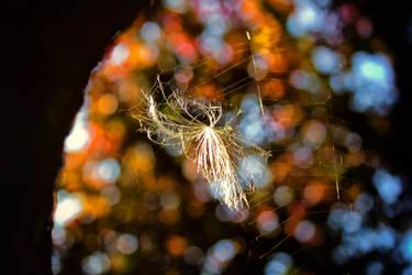 Seed+Web by Coigach