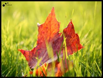 Macro - Autumn Leaf by matthudd