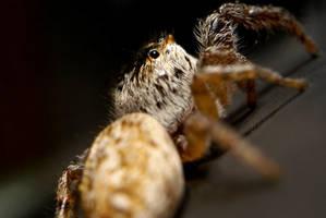 A little friend by webcruiser