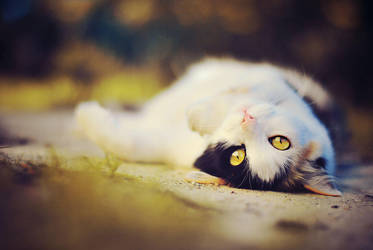 cat by maaaxxxi
