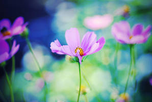 flower by maaaxxxi