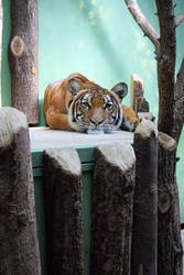 Tiger IV. by Tartatus