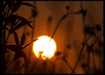 Sunset by fatdeeman