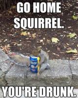 Go home squirrel by cosenza987