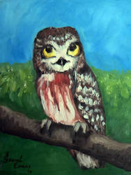 Saw Whet Owl by SynAethra