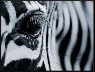 Zebra's Eye by IgorLaptev