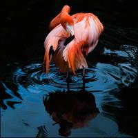 This Colorful Bird by IgorLaptev