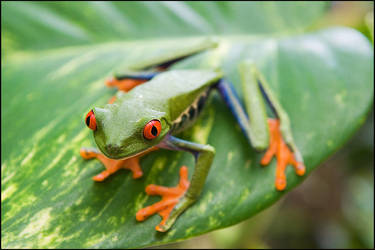 Hello From Costa Rica 2 by IgorLaptev