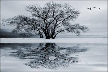 Winter Flight by IgorLaptev