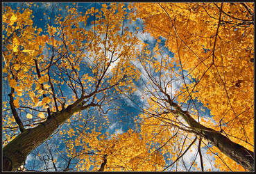 About the Fall by IgorLaptev