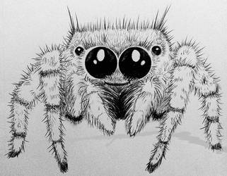 Jumping Spider by AprilMaybe
