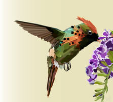 Tufted Coquette Hummingbird by SpiritStrife