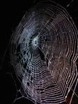 web at night 1 by trevj