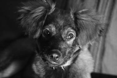 A dog by Citoyen-du-monde