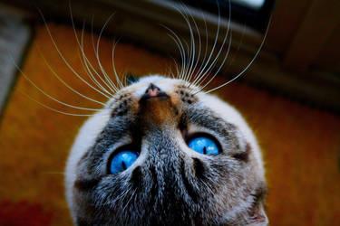 Java, the cat by Citoyen-du-monde