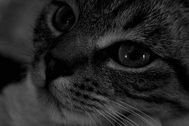 Java, the cute cat by Citoyen-du-monde