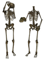 Skeleton - Head Trade 3- PNG by markopolio-stock