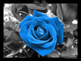 Blue Rose by premium-suede