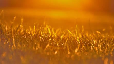 Shards of grass by 2CreepyMushrooms