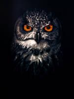 Owl by SilencioEterno