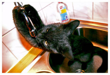 thirsty cat by U-Law