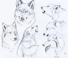 wolfy sketches by SaintWolfOfEden
