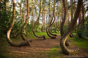 Curved Forest 2 by SeaWhisper