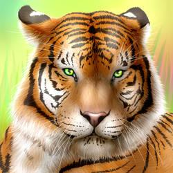 Tigre by Stefdiamel
