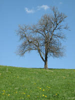 Lonely tree by darkrose42-stock