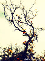 Orange tree by Jiah-ali