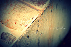 ANT by Jiah-ali
