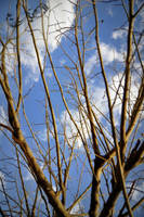 winter sky by Jiah-ali