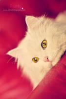 meow by Jiah-ali