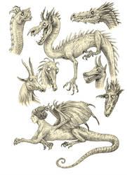 Dragony sketches by eoghankerrigan