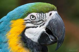 Parrot by Daan-NL