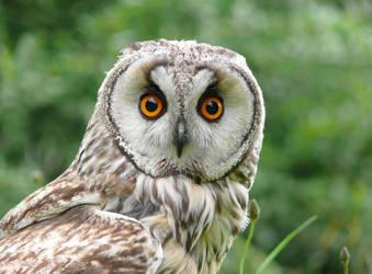 Owl by CeskaSoda