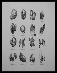 Rock Organisms by DK19