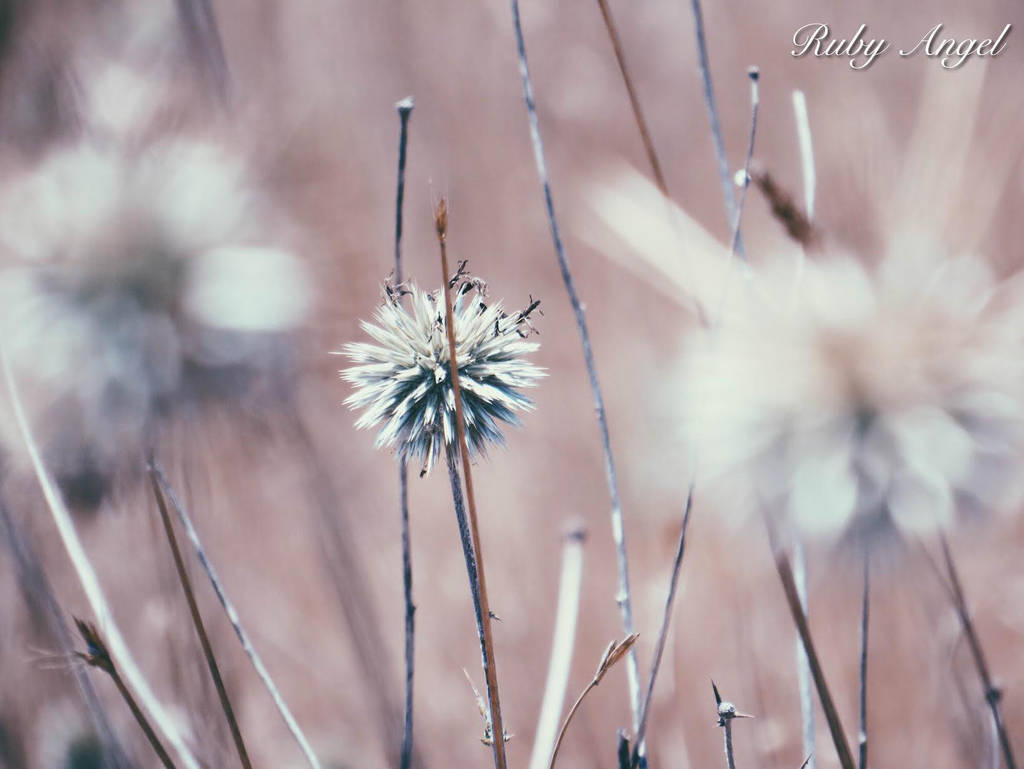 nature 01 by rubyrayangel