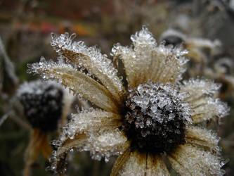 frosty flower:. by vampire-kardro